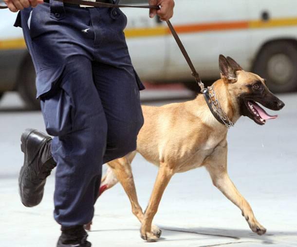 policedog02